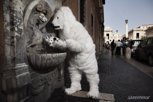 Polar Bear At Vatican City