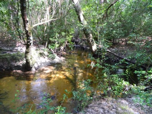 Black Creek Desoto National Forest usgov