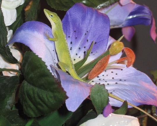 """Anolis carolinensis"". By Crystal Pare, 2007, via wikimedia"