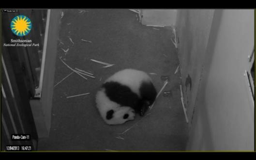 Smithsonian panda cam Bao Bao