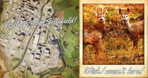 Greetings from Sellafield - Save the Sellafield Deer, Radiation Free Lakeland