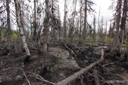 http://www.greenpeace.org/russia/en/news/03-04-2014_No_Lukoil_Komi/