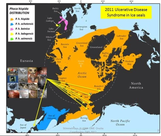 Trans-boundary collaboration on marine mammal health assessment