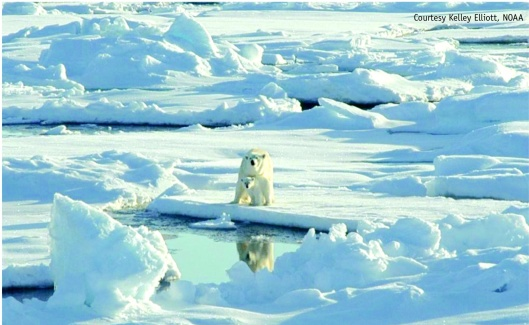 Polar Bear and Baby  NOAA