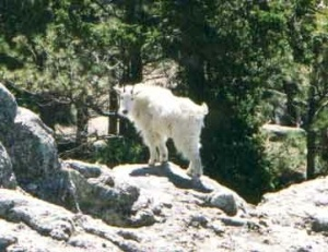 Black Elk Wilderness . net