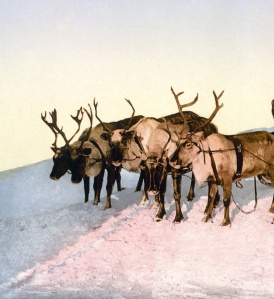 Old Russia Reindeer cropped