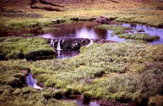 Beaver Dam Yellowstone US NPS gov