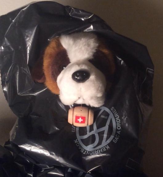 St. Bernard in garbage bag