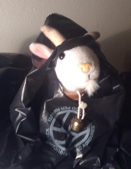 Goat in bag