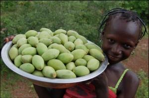 Tree Harvest in Burkina Faso (2008), CC-2.0 by Tree Aid:  https://www.flickr.com/photos/53871588@N05/5875963501/