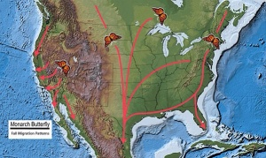 Monarch Butterfly Fall Migration Patterns. Credit: Base Map, USGS National Atlas, USFWS.