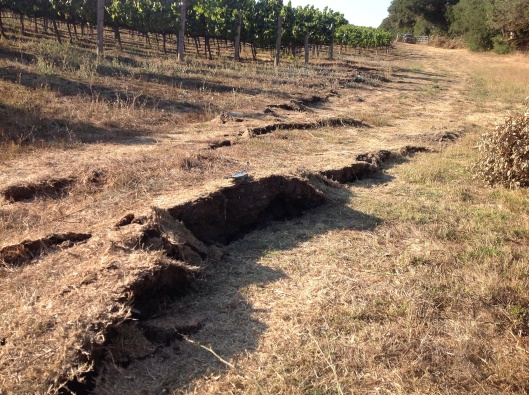 Photo taken on main rupture strand near Buhman Rd. Location: Napa, CA, USA, Date Taken: 08/24/2014 Photographer: Dan Ponti; USGS. M6.0 - 6km NW of American Canyon, California