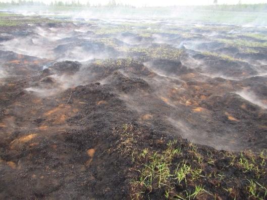 Smoldering Peat Fire Greenpeace Russia