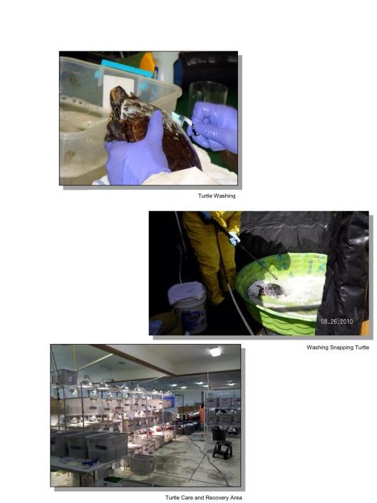 turtle washing USFWS Enbridge Spill