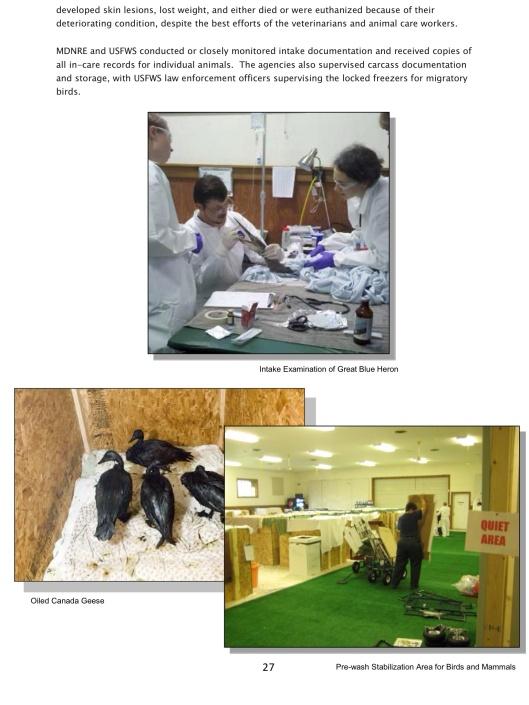 Oil Geese Heron USFWS Enbridge 2010 spill