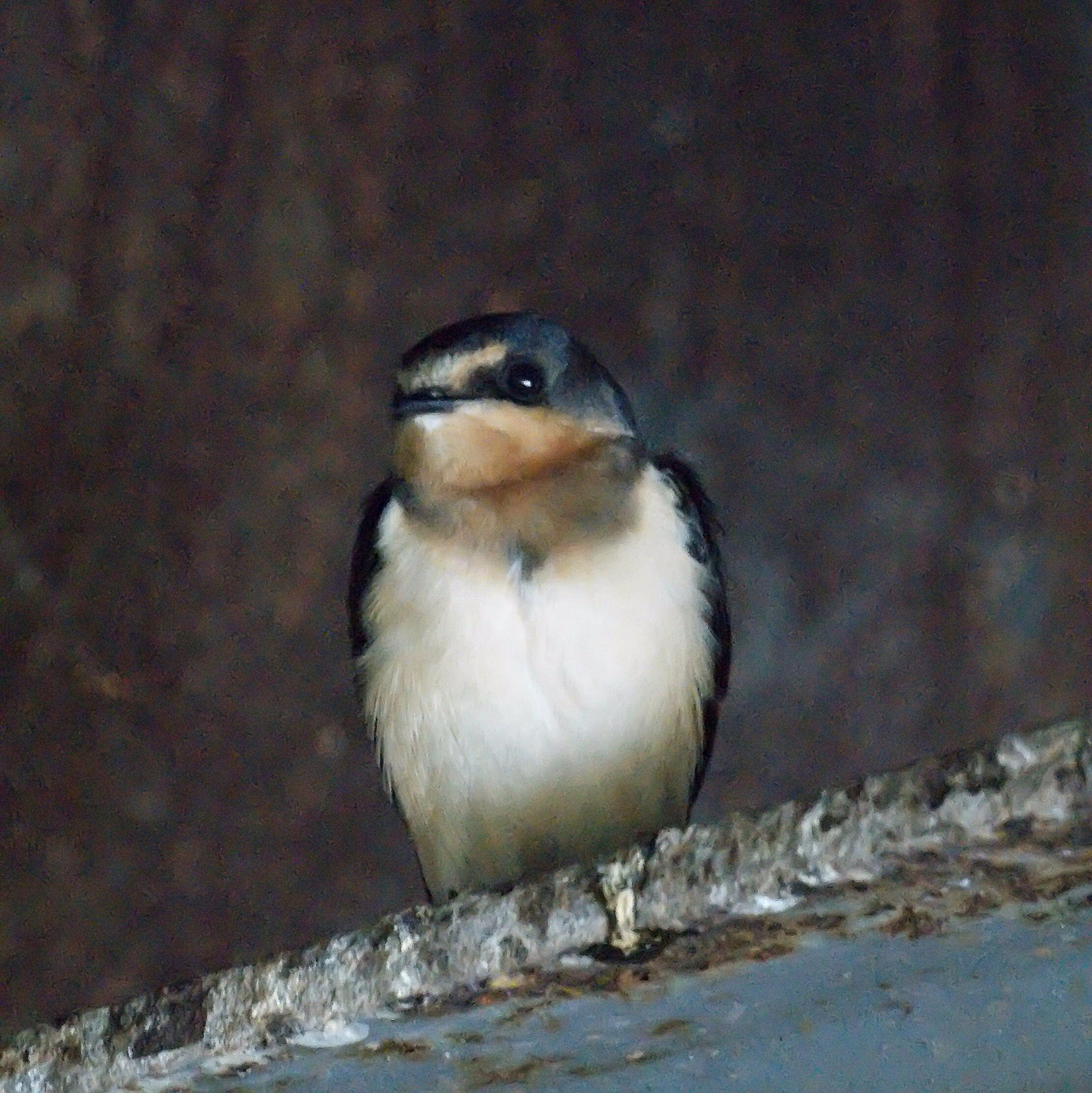 """Deformed Beaks & other Increased """"Abnormalities"""" in ..."""