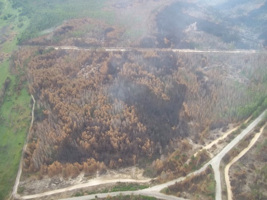 Fires near Chernobyl July 2015 Ukraine gov