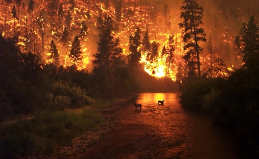 Montana Deer Wildfire USDA-US Forestry Service