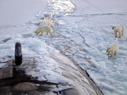 polar bears and nuclear sub