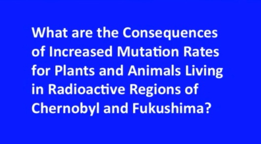 Biological Consequences of Nuclear Disasters: From Chernobyl to Fukushima, LOC-Mousseau What are Consequences Increased Mutation Rate
