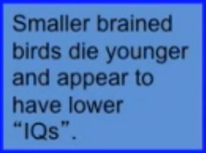 Small brained birds die younger
