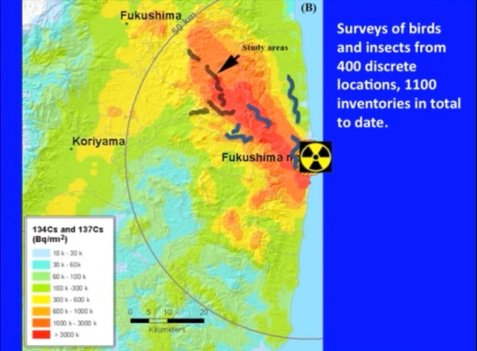 Biological Consequences of Nuclear Disasters: From Chernobyl to Fukushima, LOC-Mousseau Fukushima birds and insects