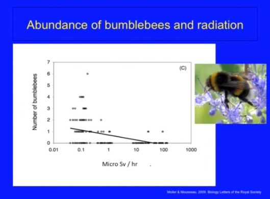 Biological Consequences of Nuclear Disasters: From Chernobyl to Fukushima, LOC-Mousseau Bumblebees disappear radiation