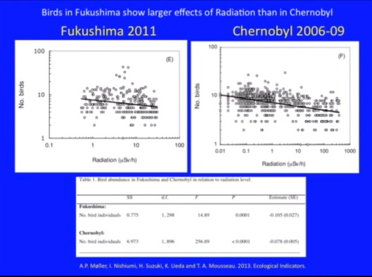 Birds Fukushima larger effects Biological Consequences of Nuclear Disasters: From Chernobyl to Fukushima, LOC-Mousseau