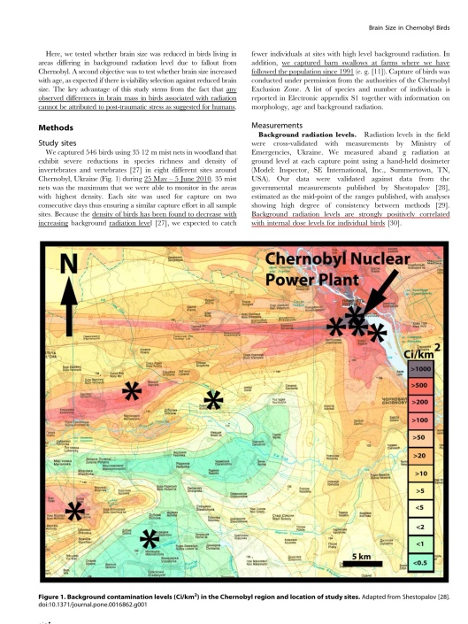 Chernobyl Birds Have Smaller Brains, p. 2