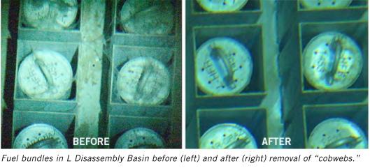 L Basin cobwebs Savannah River site microbial