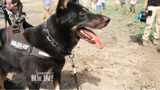 Dakota Access Pipeline Company Attacks Native American Protesters with Dogs and Pepper Spray DemocracyNow.org Sept. 3 2016, dog