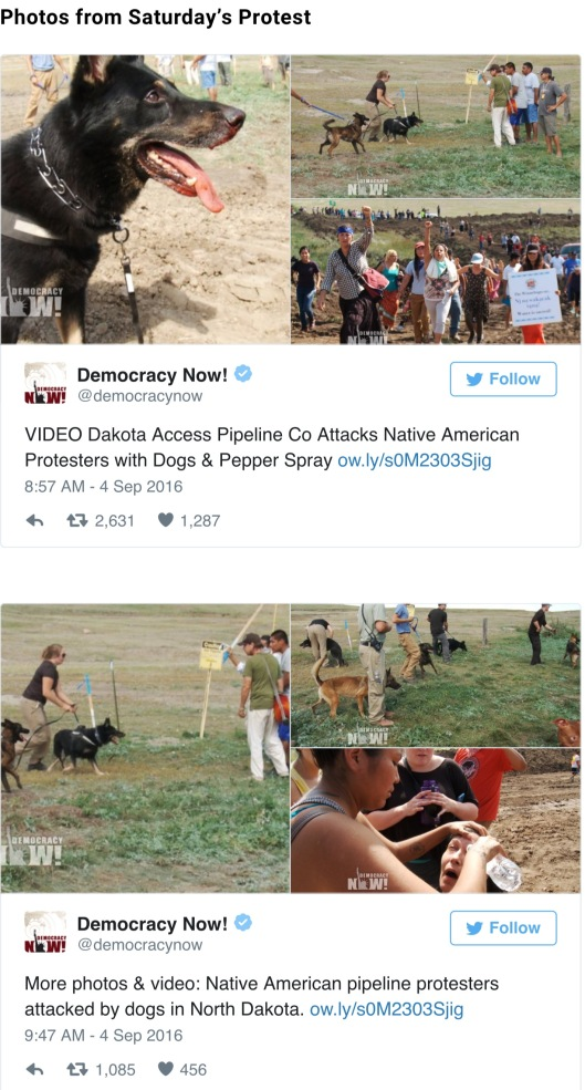 Dakota Access Pipeline Company Attacks Native American Protesters with Dogs and Pepper Spray, DemocracyNow.org Sept. 3 2016, Tweets