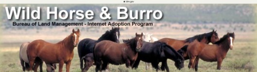 BLM Horse and Burro Adoption