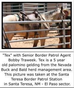 Tex Mustang Border guard