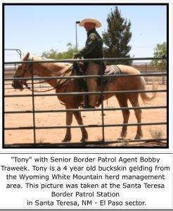 Tony Mustang Border Guard
