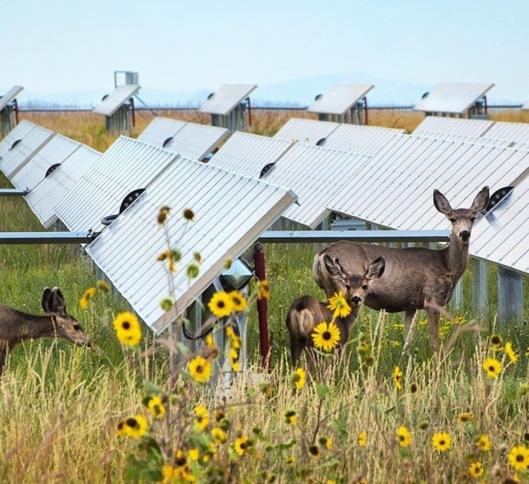 Deer solar panels NREL gov Dennis Schroeder