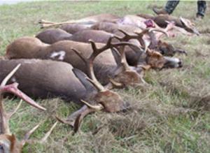 SRS radioactive hunt deer